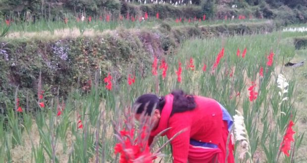 स्थानीय खेतों के फूलों से पहली बार सजेंगे गंगोत्री यमनोत्री मन्दिर,काश्तकारों की आर्थिकी भी होगी मजबूत…द्वारिका सेमवाल