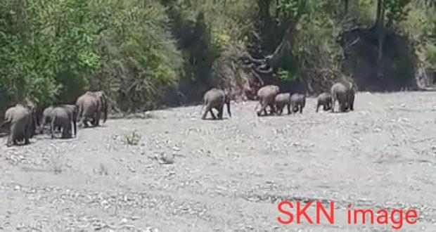 देहरादुन के थानों क्षेत्र में लॉक डाउन का मजा लेने सड़को पर आ रहे हाथी