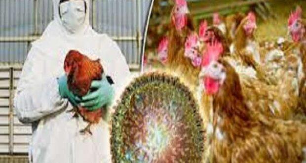 बर्ड फ्लू..उत्तराखण्ड के पड़ोसी राज्य हिमाचल में अंडे, मांस, चिकन आदि की बिक्री पर रोक,पांग झील में 1800 प्रवासी पक्षी मृत मिले…