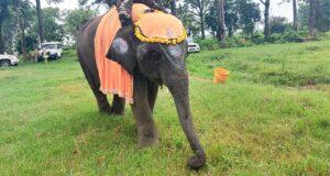 सावन ने मनाया सीटीआर में 130 किलो  गुड़, ब्रेड व केले से तैयार केक से अपना जन्मदिन
